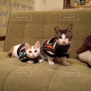 ソファーの上でお洒落している2匹のネコ - No.969576