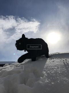 雪山で遊ぶネコの写真・画像素材[1029688]