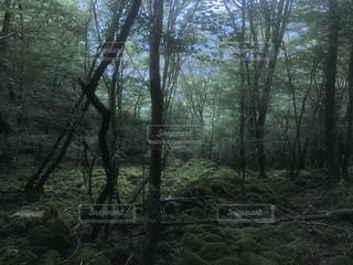 ジブリっぽい神秘的風景の写真・画像素材[970177]