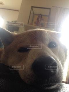犬の写真・画像素材[32029]