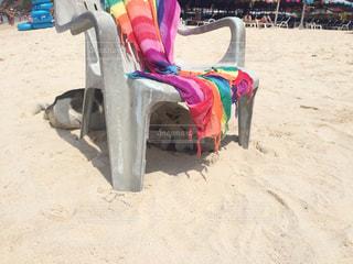 日陰で休む犬inタイの写真・画像素材[995455]