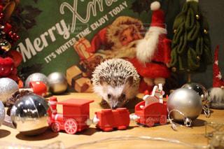 ハリネズミのクリスマス - No.969328