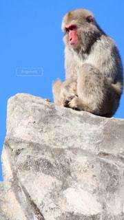 岩の上に座っている猿の写真・画像素材[983974]