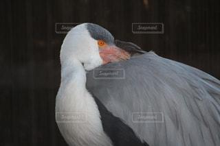 鳥のアップの写真・画像素材[984122]