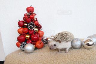 はりねずみのクリスマスの写真・画像素材[984332]