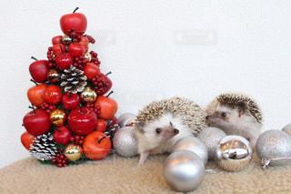 はりねずみのクリスマスの写真・画像素材[984334]