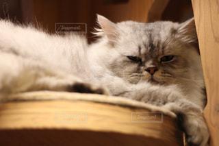 近くに木製の表面で横になっている猫のアップの写真・画像素材[992973]