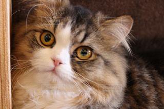 近くに猫のアップの写真・画像素材[992982]