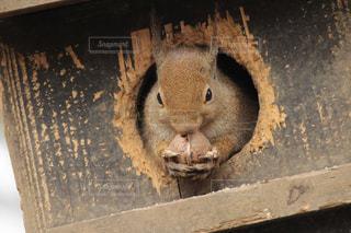 食べ物を食べるリスの写真・画像素材[993016]