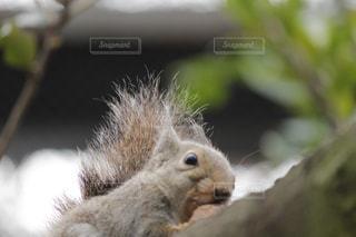 近くの枝にリスのアップの写真・画像素材[993020]
