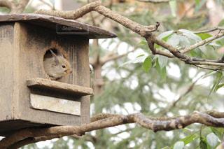 木の枝にとまった鳥の写真・画像素材[993024]