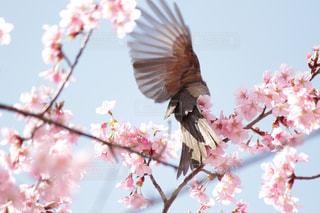 花のように鳥が止まってください。 - No.1062540