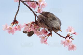 近くの花のアップの写真・画像素材[1062541]