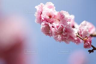 近くの花のアップの写真・画像素材[1062544]