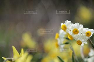 近くの花のアップの写真・画像素材[1062546]