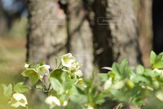近くの花のアップの写真・画像素材[1062548]