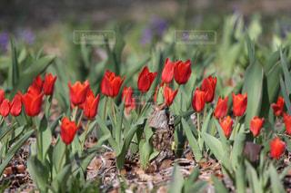 近くの花のアップの写真・画像素材[1062554]