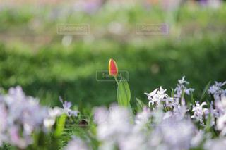近くの花のアップの写真・画像素材[1062555]