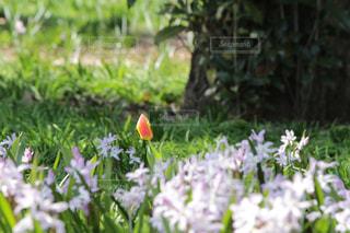 近くのフラワー ガーデンの写真・画像素材[1062556]