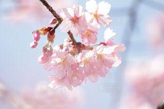 近くの花のアップの写真・画像素材[1062558]