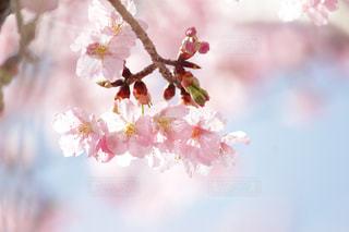 近くの花のアップの写真・画像素材[1062560]