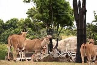 動物の群れの写真・画像素材[1163107]