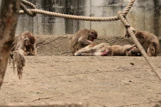 毛繕いする猿の写真・画像素材[1163126]