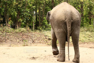 土の中に立っている象 - No.1163146