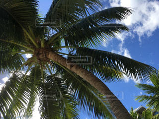 プールサイドの大きなヤシの木の下でリラックスの写真・画像素材[969474]