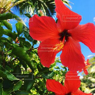 植物の赤い花の写真・画像素材[969904]