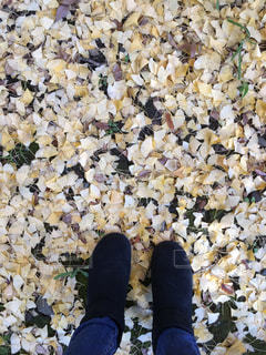 落ち葉の中をお散歩の写真・画像素材[970026]