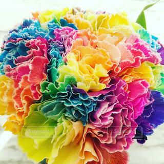 カラフルな花の植物の写真・画像素材[970039]