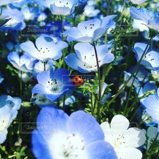 近くの花のアップの写真・画像素材[971930]