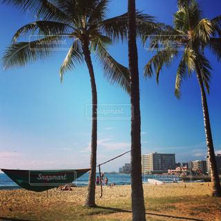 ヤシの木とビーチの写真・画像素材[971933]