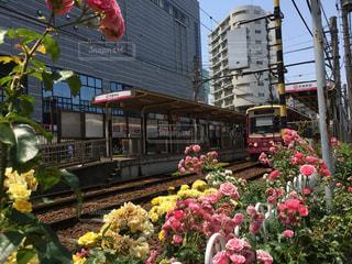 都電沿いに咲くバラの写真・画像素材[1207571]