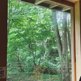 窓越しの緑の写真・画像素材[970656]