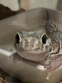 水浴びの写真・画像素材[969855]