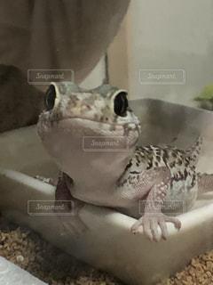 近くに爬虫類のアップの写真・画像素材[969856]