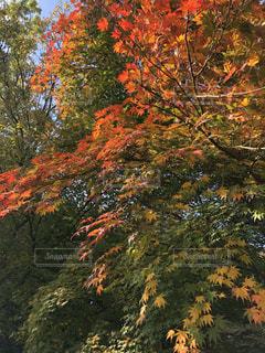 近くの木のアップの写真・画像素材[970137]