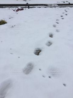 雪に覆われたフィールドの写真・画像素材[969864]