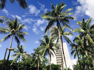 ♡Hawaiiで空を見上げたら♡の写真・画像素材[969945]