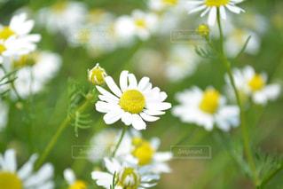 自然の写真・画像素材[987680]