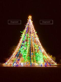 大きなツリーの写真・画像素材[970759]