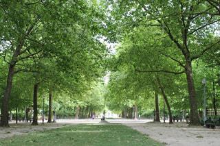 公園の大きな木の写真・画像素材[970235]