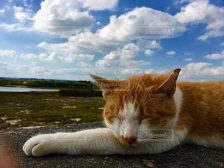 水の体の横に横になっている猫の写真・画像素材[970181]