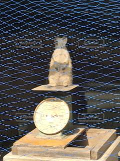 はかりの上のミーアキャットの写真・画像素材[974603]