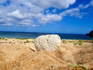 ハートの珊瑚礁の写真・画像素材[975476]