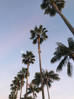 ヤシの木と夕やけの写真・画像素材[992718]