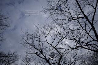 曇りの日にツリーの写真・画像素材[970412]