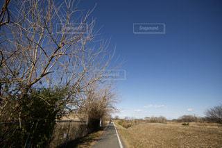 フィールドの真ん中の木の写真・画像素材[970416]